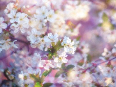 Acupunctuur Duiven kan helpen bij allergie / hooikoorts